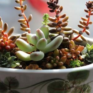 リユース植木鉢 two