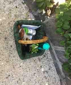 バジルとかぼちゃの苗を植えました🌱 太陽じりじりしてます🔥