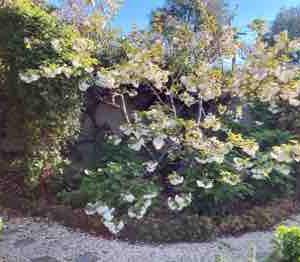 我が家の庭にも春がたくさん🌸