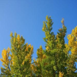 季節を告げる色