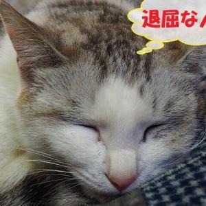 かまってちゃん(猫編)