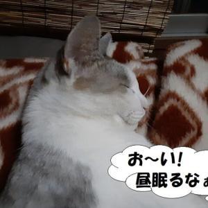 孤高の猫、孤独の人^^;