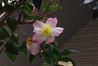異常気象に耐えた花たち