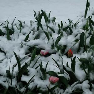 都心でも積雪観測、これも気候変動の影響でしょうか?