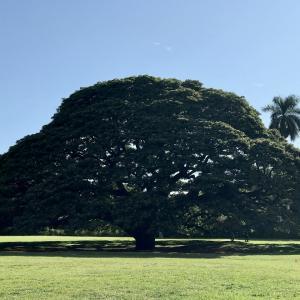 モアナルアガーデン 友達とのハワイ観光 2019 11月