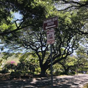 木梨目線 憲sunハワイで植えた木?!