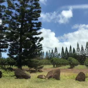 ハレイワタウンの今 ハワイ動画