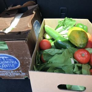 ハワイ移住生活 フードバンクで頂いたお野菜を、ご近所さんに渡したら