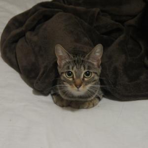 ブリのブログができたよ!奇跡の美猫ショット!