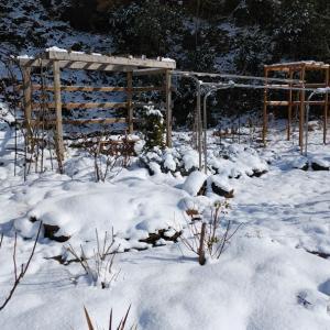 大雪、そして断水…。
