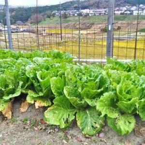 里山のお友達にお野菜いっぱい頂きました