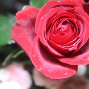 「無条件の愛と条件つきの愛」誤魔化しナシ!出し惜しみナシ!の愛の講義♡