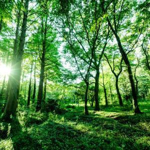 利益だけを考えてきた結果の今この世界 破壊されているのは環境だけでなく「こころ・精神」もですよ!