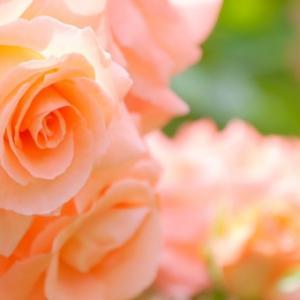 アダルトチルドレン・それって本当に愛ですか?愛ではないものを愛だと思い込まされていませんか?