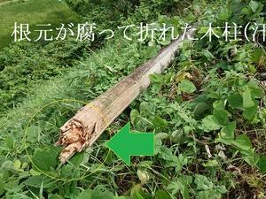 木柱の倒壊! 見えないところででゆっくり腐っていきます(汗)