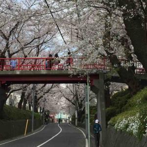 2020年3月収支(福山雅治「桜坂」)
