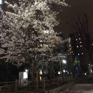 2019年3月収支(恵比寿公園の夜桜を愛でる…)