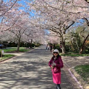 桜以外は、自主隔離⁉️