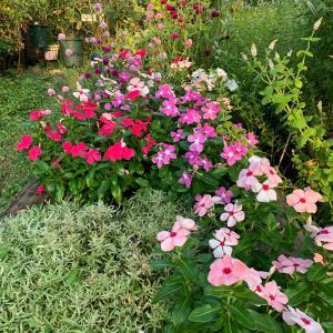 夏花壇の様子