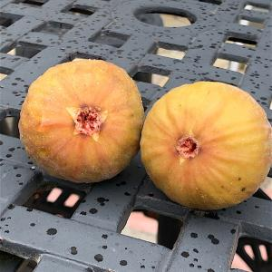 イチジク★初収穫 2020