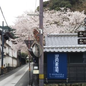 静かにしっとり桜散歩♪