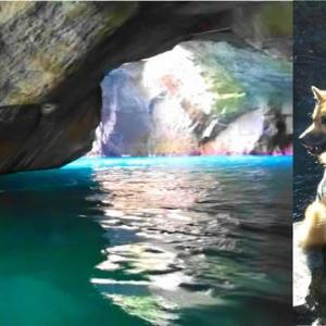 洞窟の 遊覧船は 犬NG/伊豆半島の旅8 堂ヶ島天窓洞