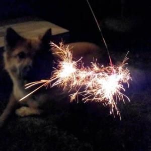 愛犬と おうち花火は しっとりと…
