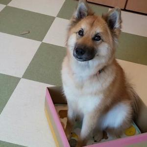 ふありんは 我が家の箱入り 娘だよ