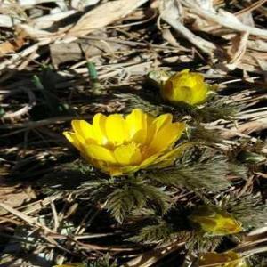 誰のために咲く、主なき春