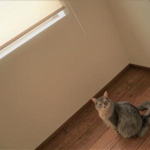 窓を開けるだけで始められる。秋の虫干しチャレンジのススメ