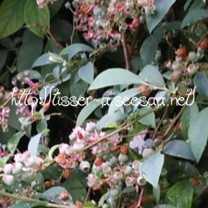 Bonheur Gourmand 幸せのスイーツ 進捗(10) & 癒しの花木