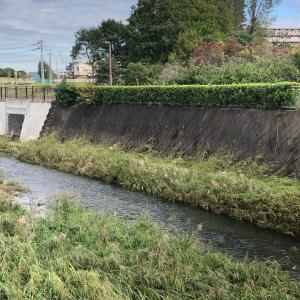 【街角スケッチ】水の流れている残堀川