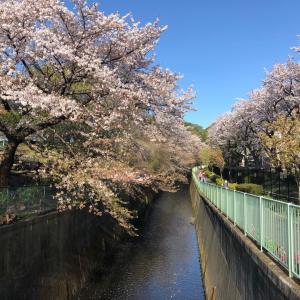 【街角スケッチ】高井戸駅付近の桜から