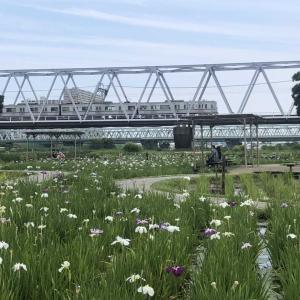 【街角スケッチ】小岩菖蒲園と京成電車
