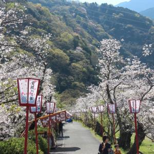 武丈公園の桜 in 西条市
