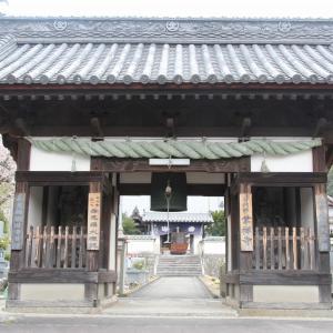 掌禅寺の金龍桜 in 今治市菊間町