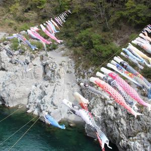 大歩危渓谷の鯉のぼり in 徳島県