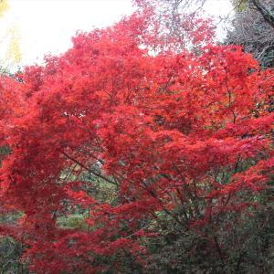 紅葉を訪ねて② 鈍川渓谷