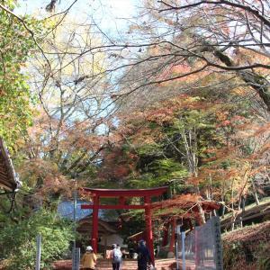 紅葉を訪ねて④ 大洲市稲荷山公園 内子町廣瀬神社 他