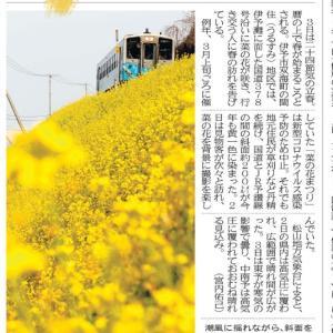 菜の花畑 in 伊予市双海町