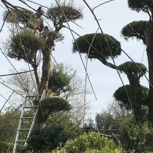 庭木の剪定・・・職人さんの技を盗み見