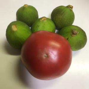 トマトといちじく・・・最初の一個と最後の収穫
