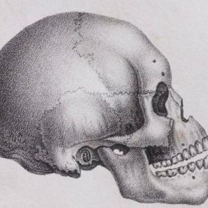 【広島】小学生、人骨を発見して大騒ぎに!