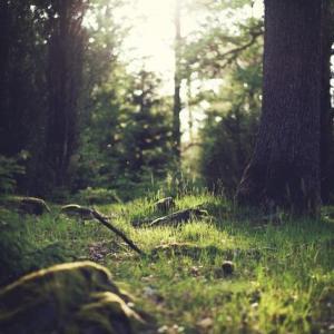 【神秘】生まれる前の記憶がある人間、とても興味深い