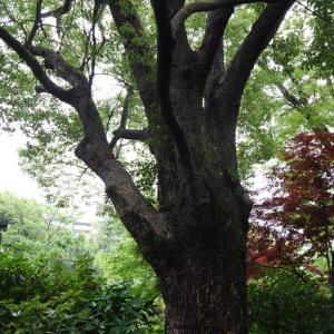 トトロの木 みっけ(*^^*)