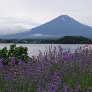 今日の朝富士