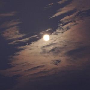 パール富士狙いが雲に邪魔されました
