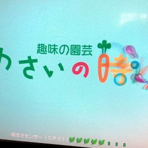 NHKのやさいの時間🍆😉🍆😉‼️‼️