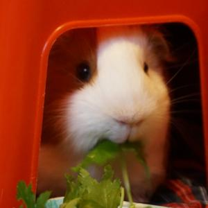 野菜ジュース頂きます