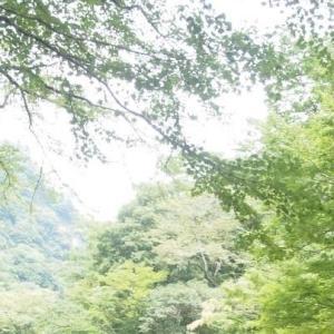 夏は涼しい!猿を間近で見られる神庭の滝へ。
